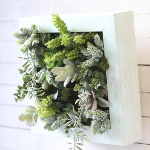 Cuadros de plantas y Jardín vertical