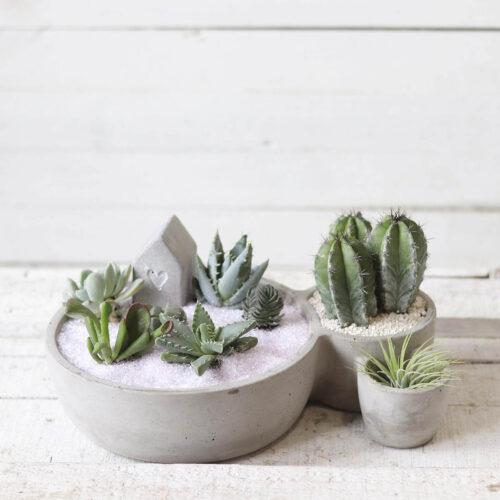 composición cactus