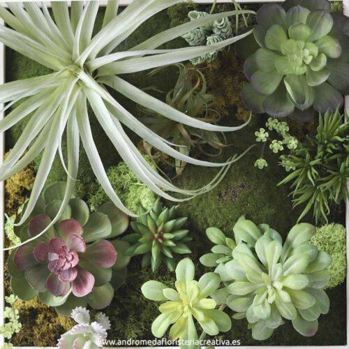 cuadro jardin vertical tillandsia